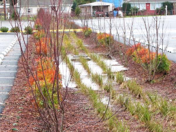 Bioswales - Rain Garden