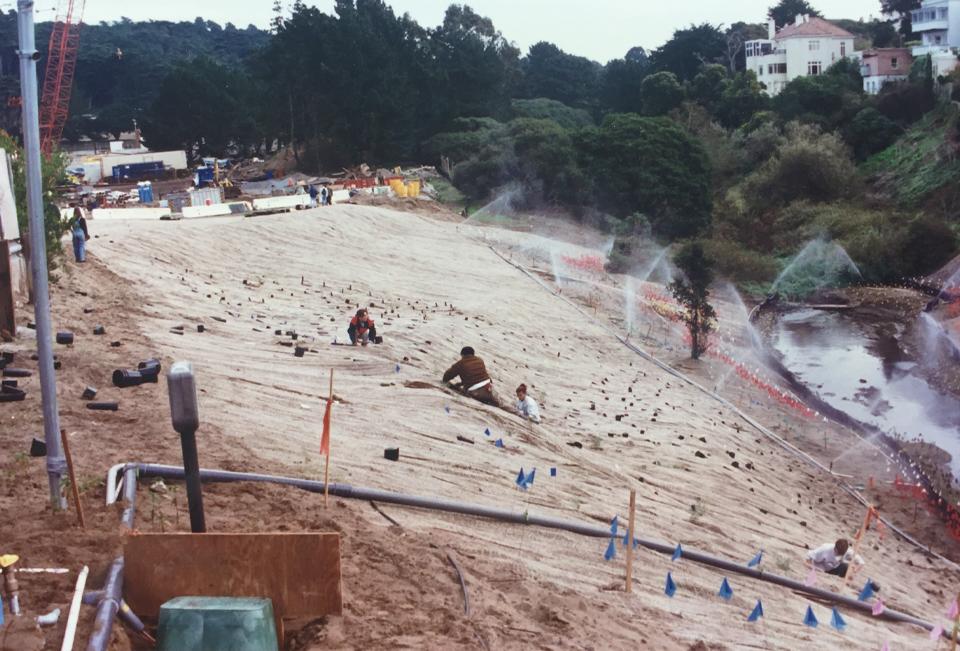Lobos Creek Mitigation