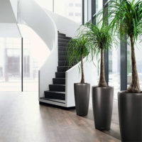 Lobby - Interior Plantscaping
