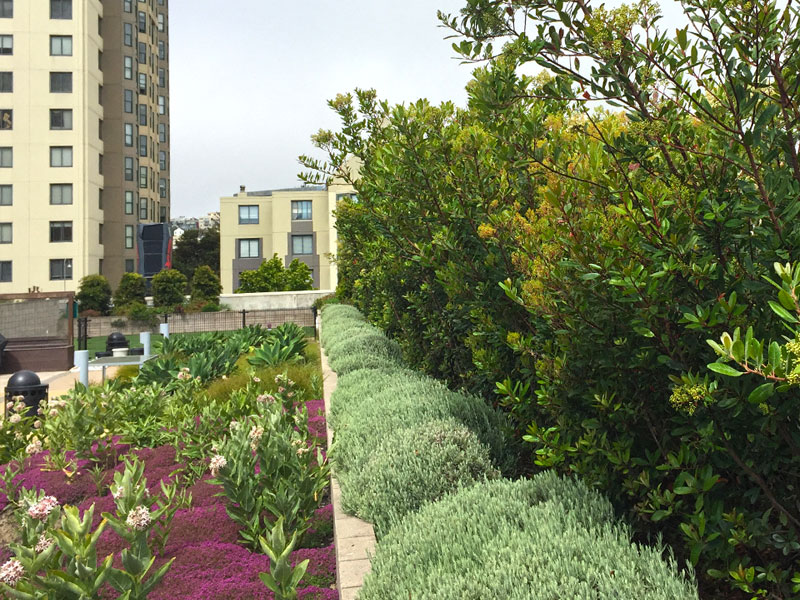 Green Roofs & Rooftop Gardens