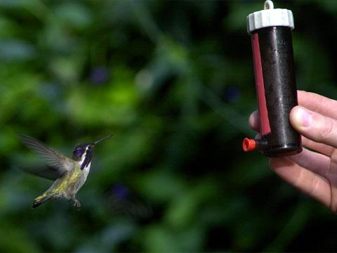 Nectar Recipe - Smithsonian