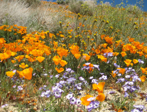 Profile – California Native Plant Society
