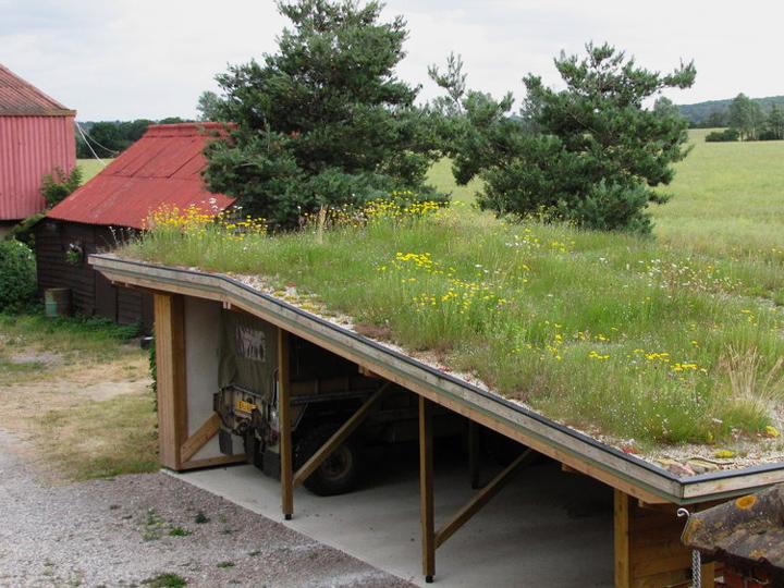 Grass Living Roof