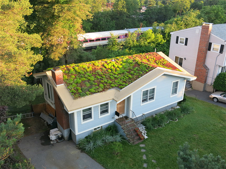 Example of Green Roof