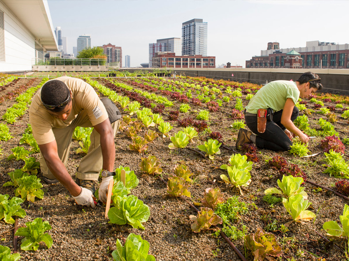 Rooftop Farming
