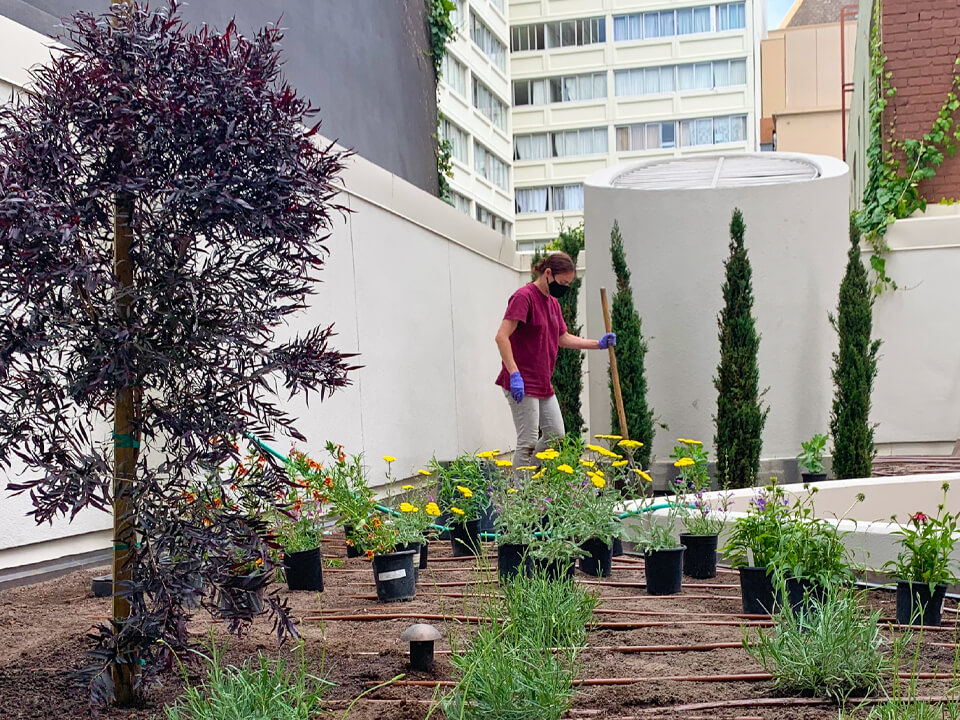 Symphony Towers - Rooftop Garden
